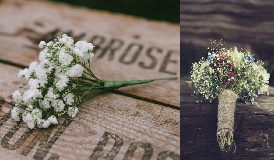 Gorgeous Gypsophila